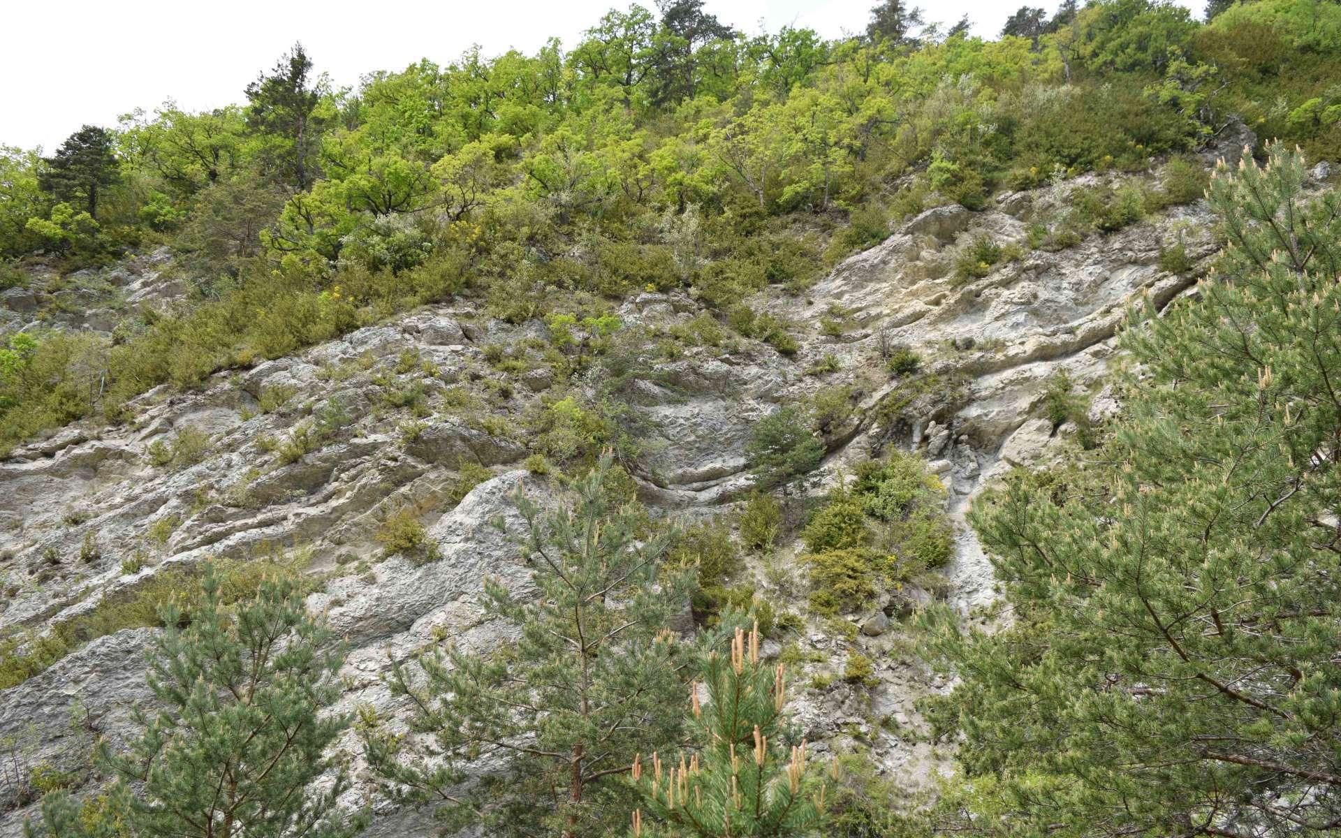 Tuf calcaire de l'Epine (Crédits : Sabine Meneut)