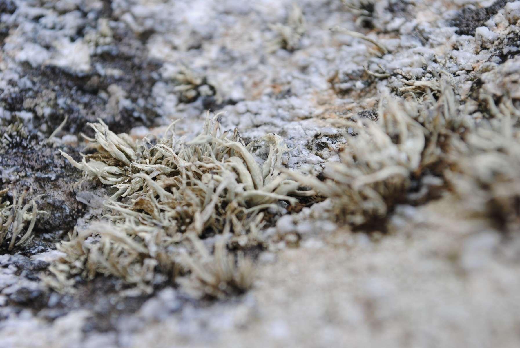 Lichen - Crédit: photothèque Bretagne Vivante