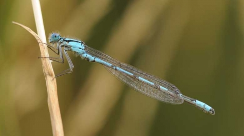 Agrion porte coupe