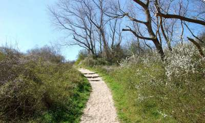 Sentier de la dune Marchand (Crédits : Ecobalade)