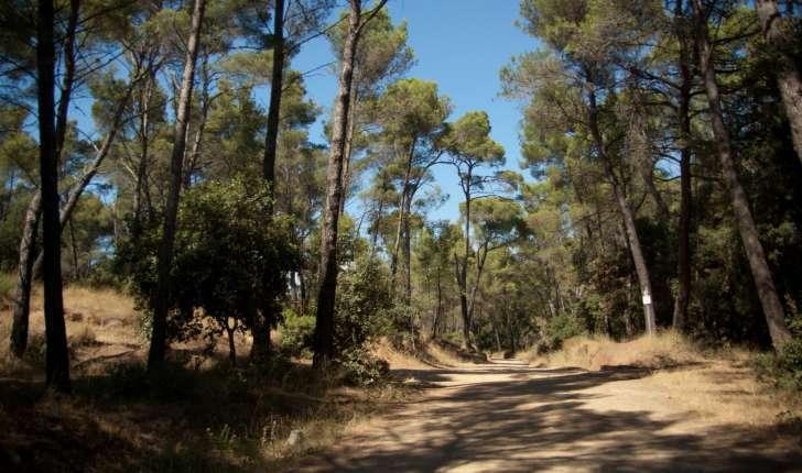 Sentier de la Belle-Pierre- Forêt de Janas