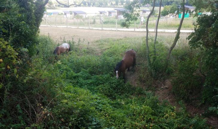 Ecopâturage au quartier des Brichères