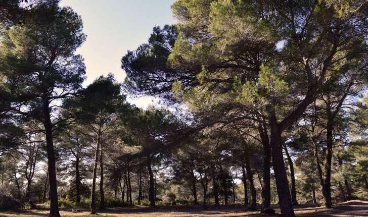 EcoBalade de St Cannat (Crédits : Sabine Meneut)