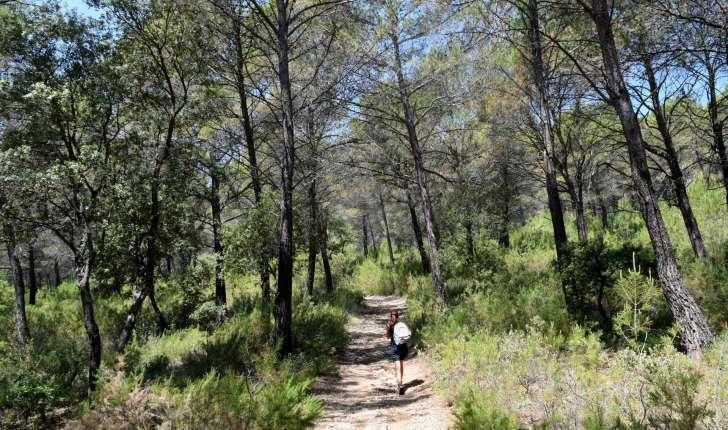 Sentier dans la forêt sur la balade de Rognes (Crédits : Léa Charbonnier)