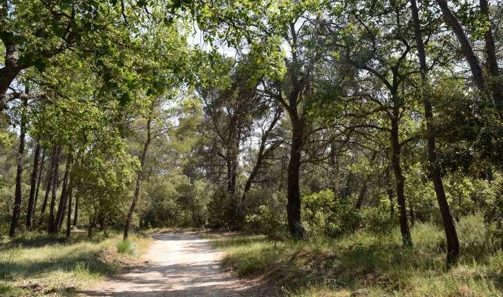 Forêt sur la balade de Jouques (Crédits : Léa Charbonnier)