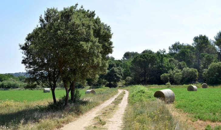 Sentier de la balade de Jouques (Crédits : Léa Charbonnier)