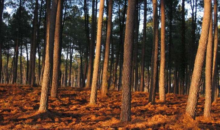 Ecobalade de Brocas - Landes (Credit: Jérôme Fouert-Pouret)