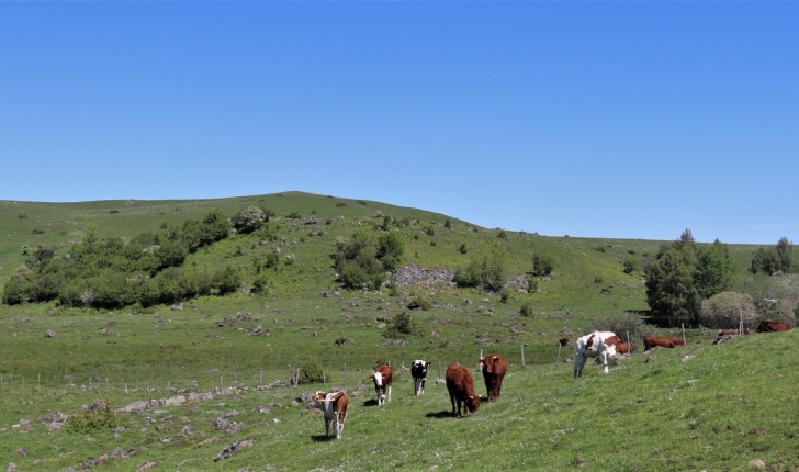 Estives du plateau de Chastel-sur-Murat (Crédit : Laura Azzolina)