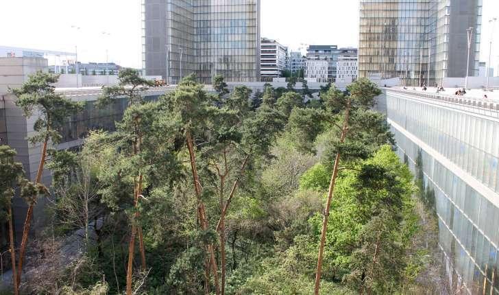 Le jardin-forêt de la Bibliothèque Nationale de France (Crédits : Léa Charbonnier)
