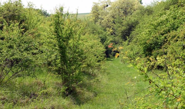Le long de la voie romaine, la nature reprend ses droits.