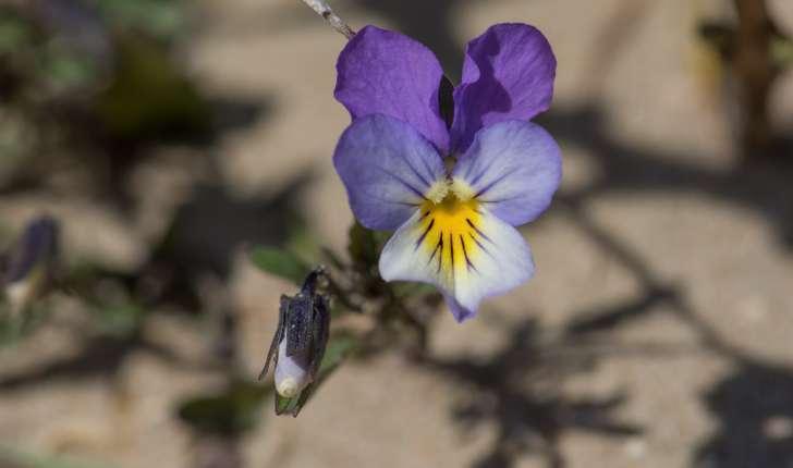 Violette de Curtis (Crédits : Jerôme Boisard)