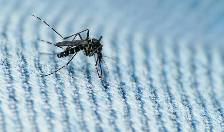 Aedes albopictus (Skuse, 1894)