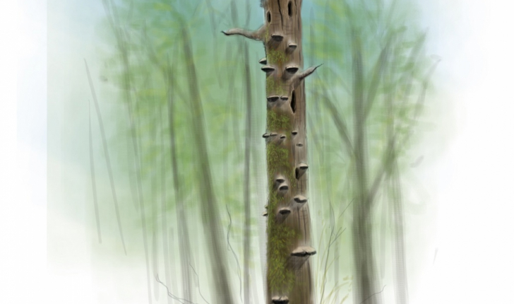 arbre mort credit Claire Motz