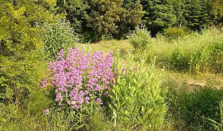 Jardin papillons (Crédits: Parc d'Aoubré)