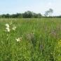 Prairie - crédit Agrenaba