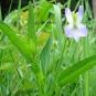 Violette-élevée-crédit-RNN-la-Bassée
