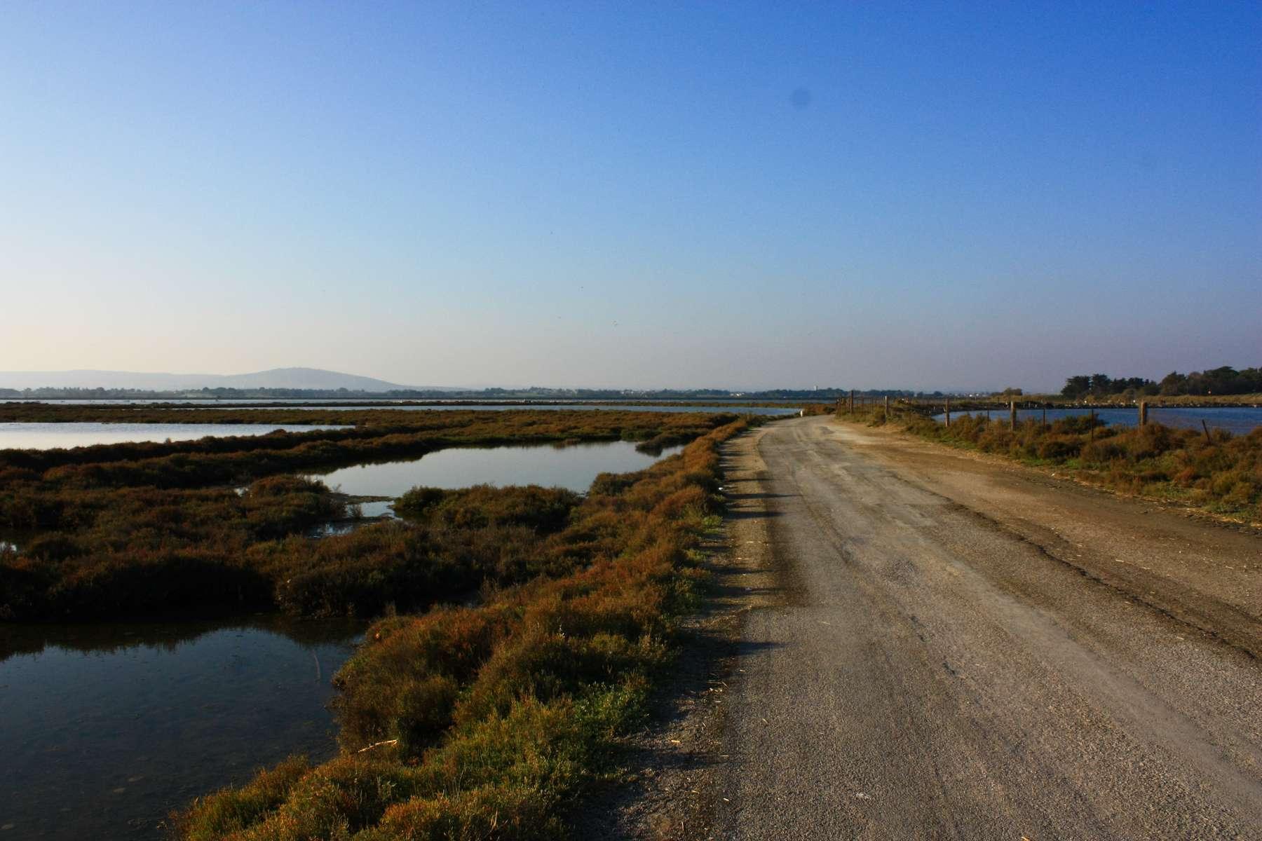 Ecobalade des étangs de Villeneuve-lès-Maguelone (Crédits : Cyril Gautreau)