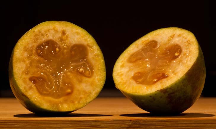 Fruit du goyavier de Montevideo (Crédits Russellstreet)