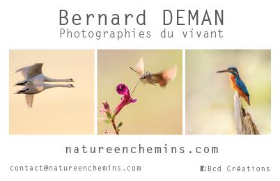 Bernard Deman