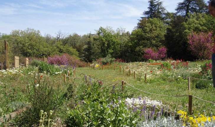 Le jardin des papillons - (Crédits Aoubré)