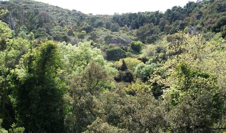 Forêt de Belle Pierre, Toulon