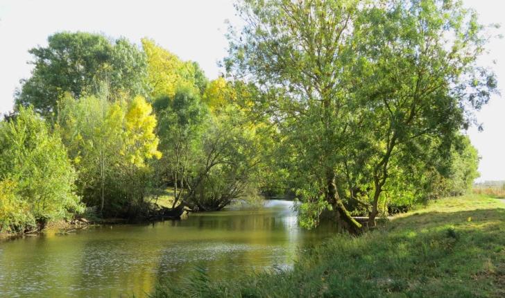 Balade en Brière (44) - randonnée dans le Parc naturel régional de Brière