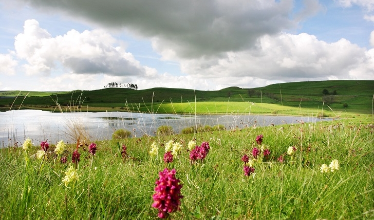 Balade Réserve Naturelle Tourbière du Jolan et de la Gazelle - Cantal - Murat Crédits OT Hautes Terres