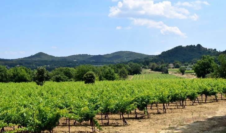 Passage dans les vignes sur la balade de Rognes (Crédits : Léa Charbonnier)