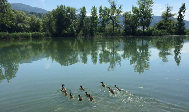Balade de Volonne - le tour du lac (Crédits : Olivier Rovellotti)
