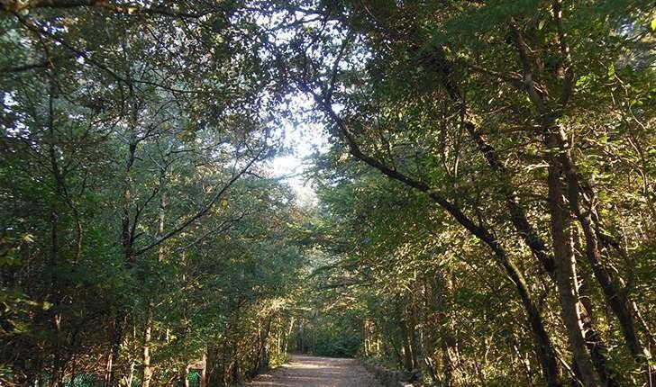 Gestion durable de la forêt (Crédits: Parc d'Aoubré)