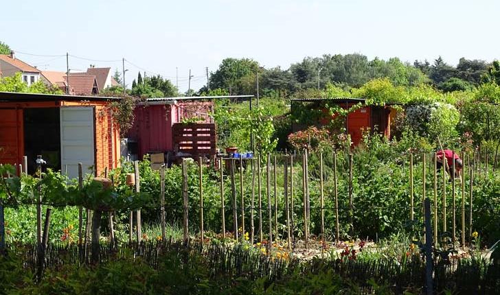 Jardins familiaux - Crédit Département du Val de Marne