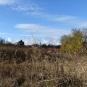 Prairie-non-paturée-balade-Vitry-Parc-Lilas-Val-de-Marne.